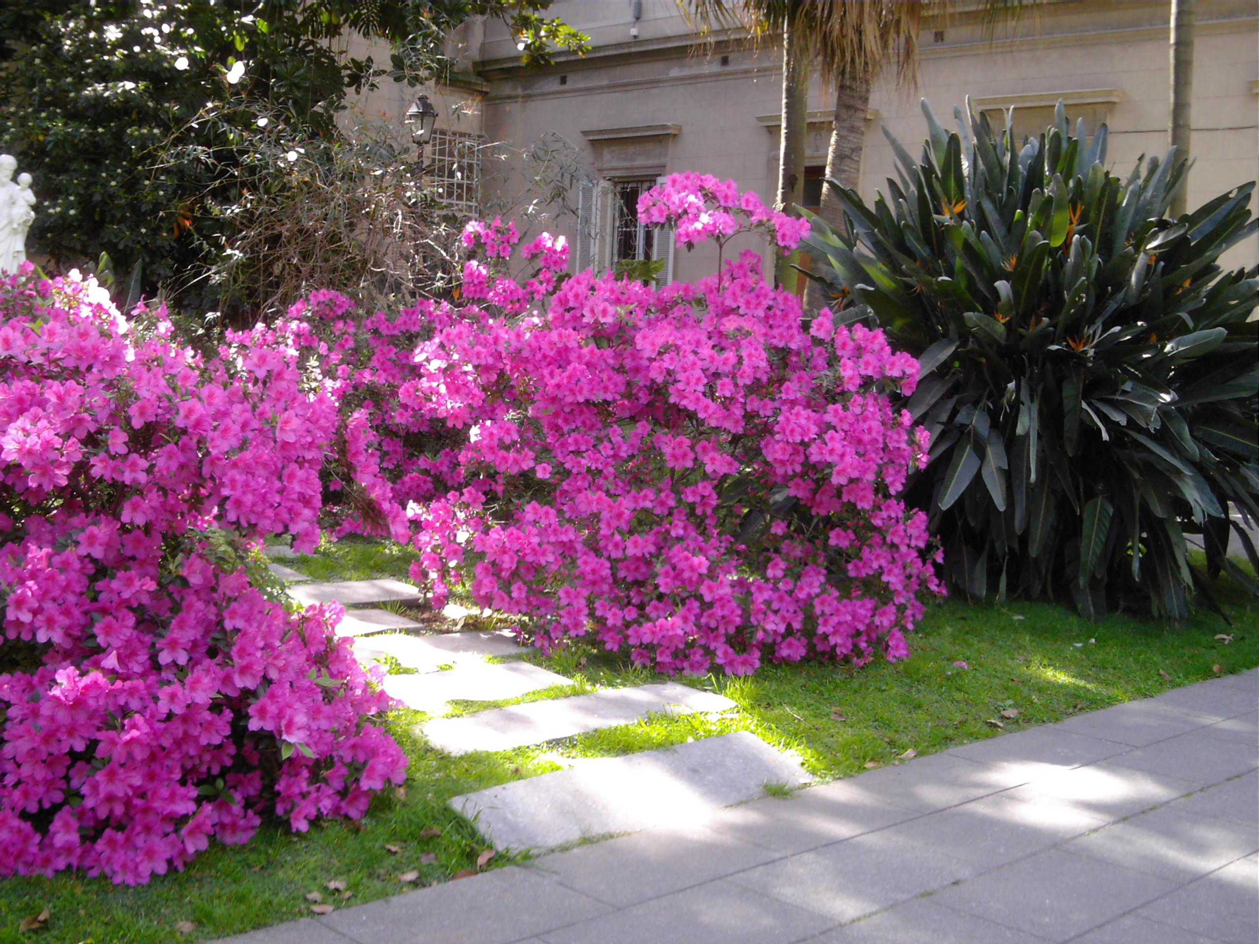 Fichas de plantas ornamentales for Arbustos ornamentales